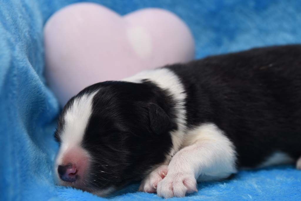 2015 11 05 Just the one and only von den Traumpfoten DSC 3126