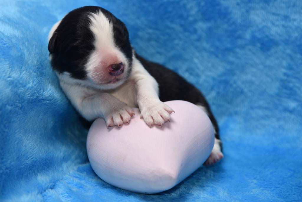 2015 11 05 Just the one and only von den Traumpfoten DSC 3133