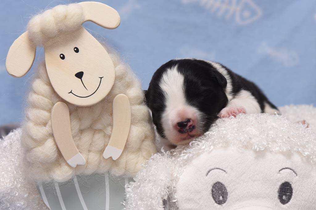 2015 11 08 Juste the one and only von den Traumpfoten DSC 3142