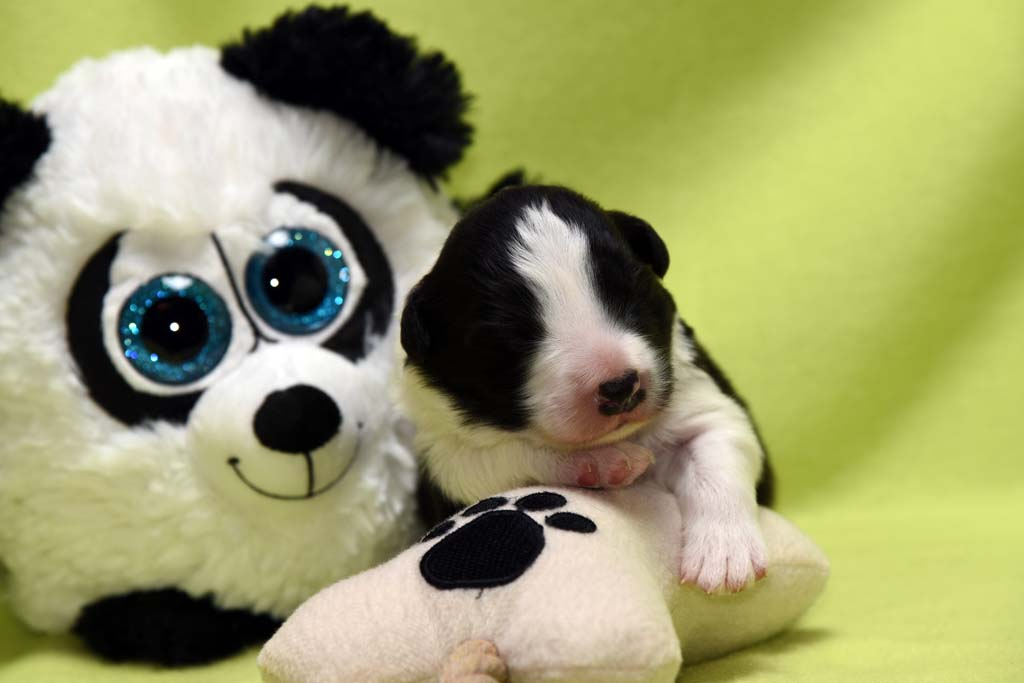2015 11 10 Just the one and only von den Traumpfoten DSC 3185
