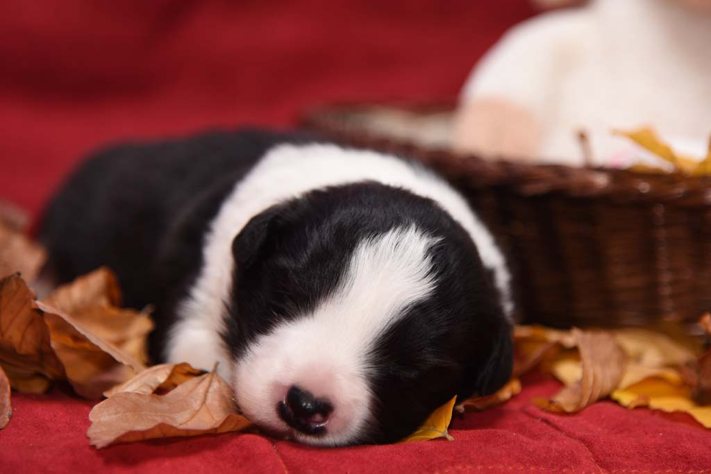 2015 11 14 Juste the one and only von den Traumpfoten DSC 3238