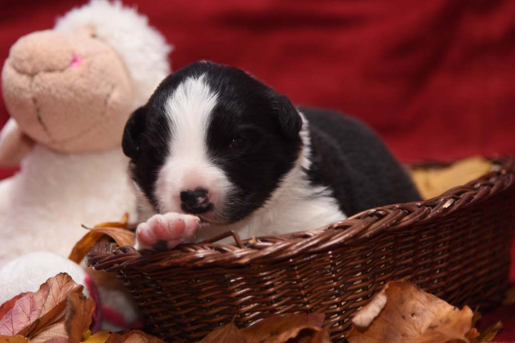 2015 11 14 Juste the one and only von den Traumpfoten DSC 3251