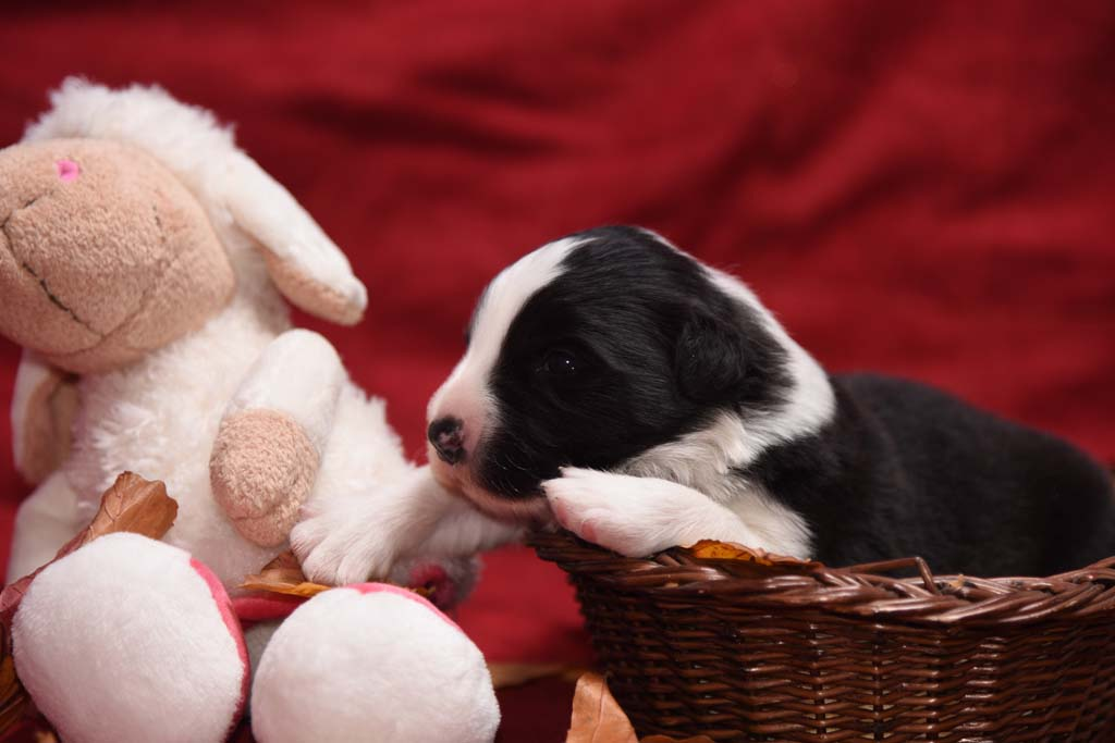 2015 11 14 Juste the one and only von den Traumpfoten DSC 3253