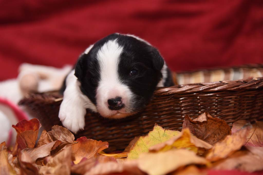 2015 11 14 Juste the one and only von den Traumpfoten DSC 3261