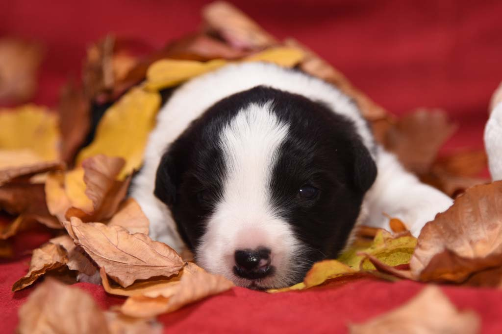 2015 11 14 Juste the one and only von den Traumpfoten DSC 3270a