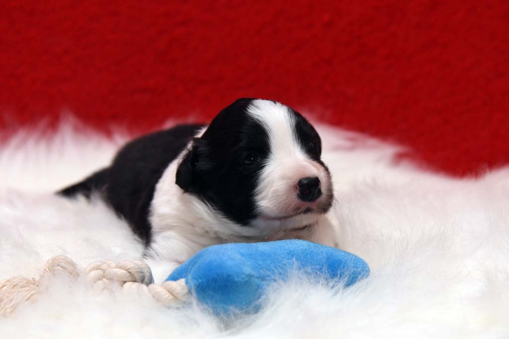 2015 11 17 Juste the one and only von den Traumpfoten DSC 3355