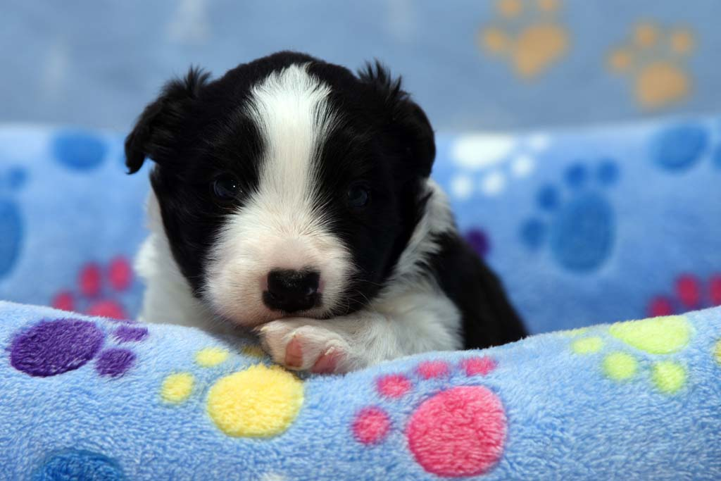 2015 11 22 Juste the one and only von den Traumpfoten DSC 3372