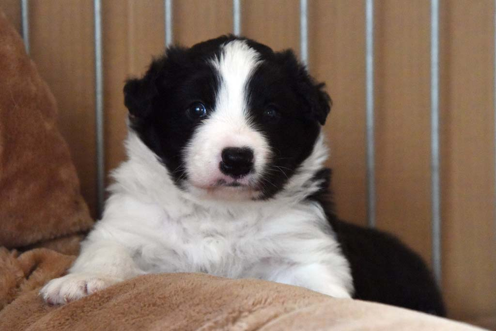 2015 11 28 Juste the one and only von den Traumpfoten DSC 3381