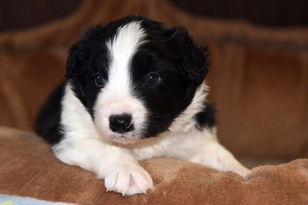 2015 11 28 Juste the one and only von den Traumpfoten DSC 3403