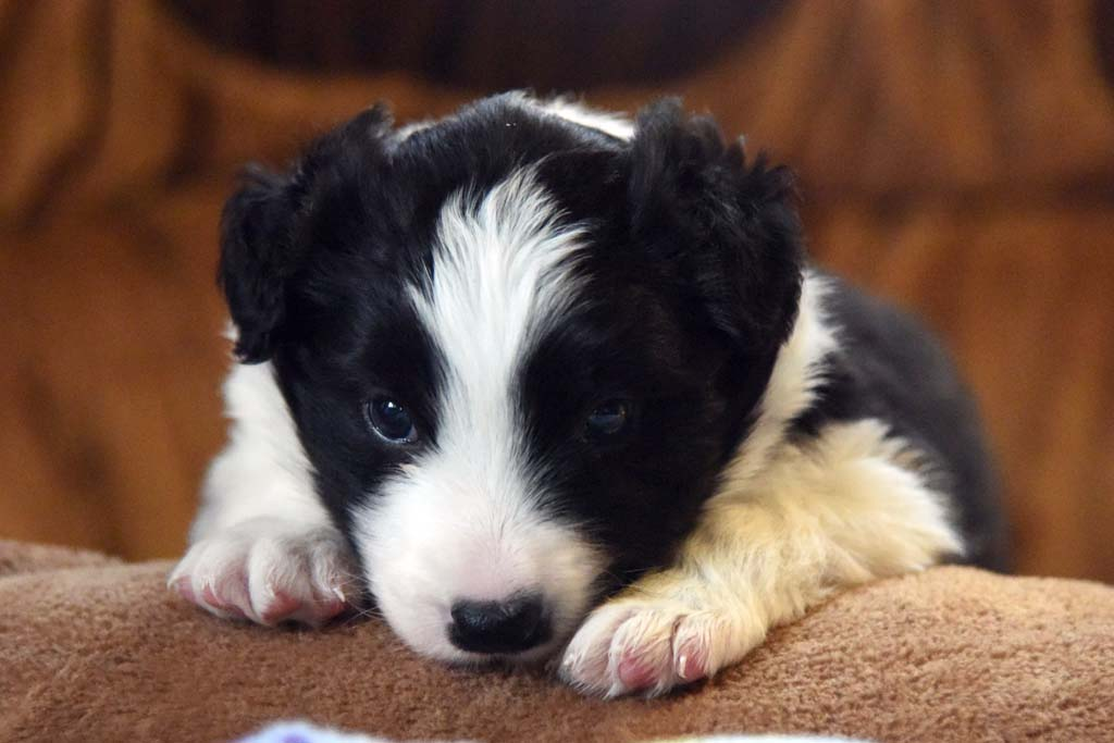 2015 11 28 Juste the one and only von den Traumpfoten DSC 3411