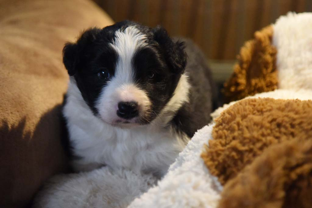 2015 11 28 Juste the one and only von den Traumpfoten DSC 3416