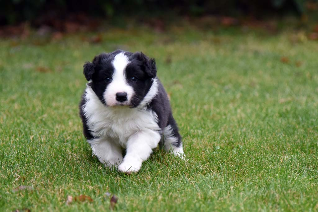 2015 11 29 Juste the one and only von den Traumpfoten DSC 3417