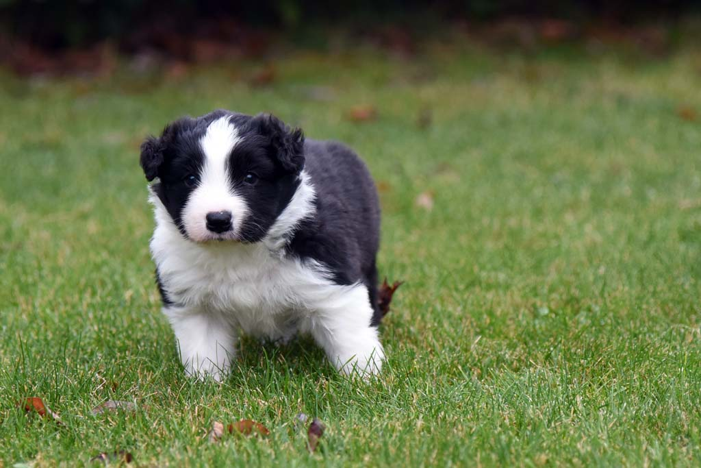 2015 11 29 Juste the one and only von den Traumpfoten DSC 3418