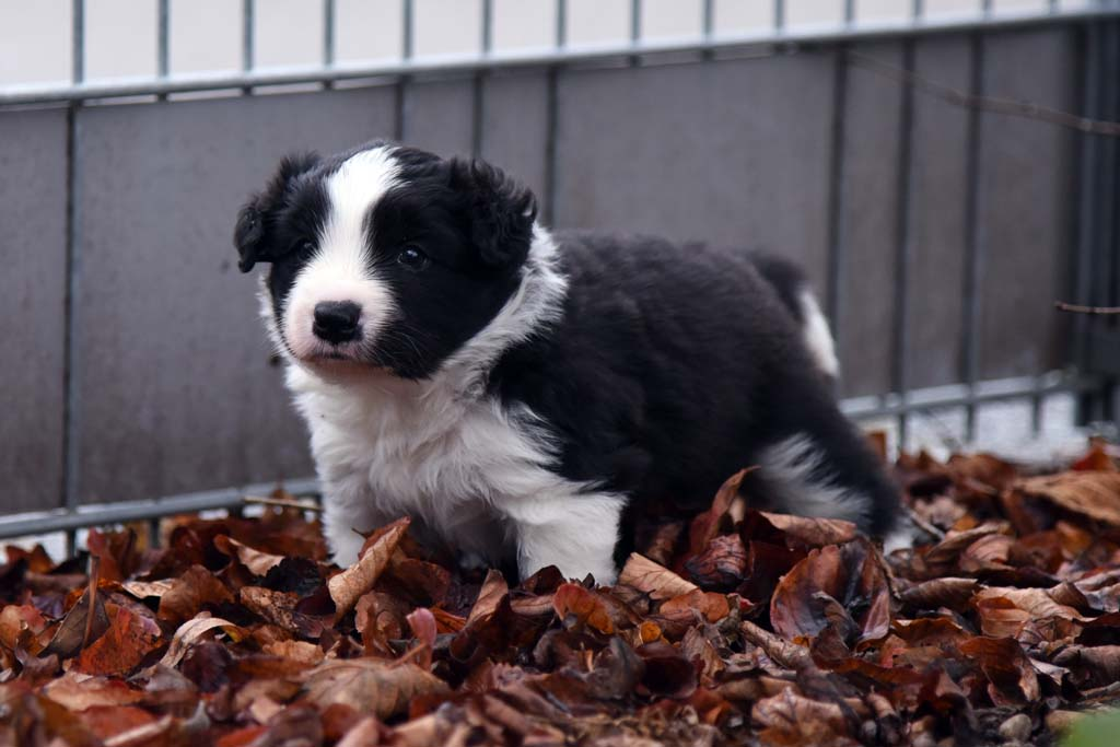 2015 11 29 Juste the one and only von den Traumpfoten DSC 3426