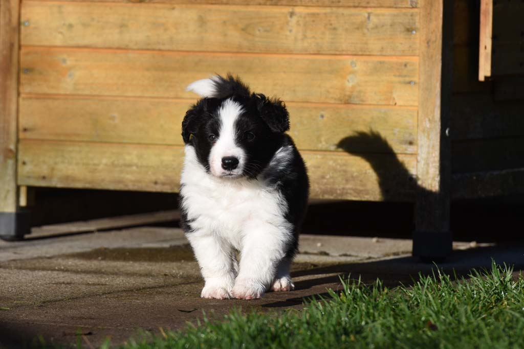 2015 12 05 Just the one and only von den Traumpfoten DSC 3435