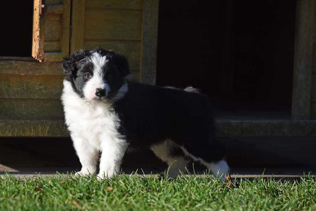 2015 12 05 Just the one and only von den Traumpfoten DSC 3458