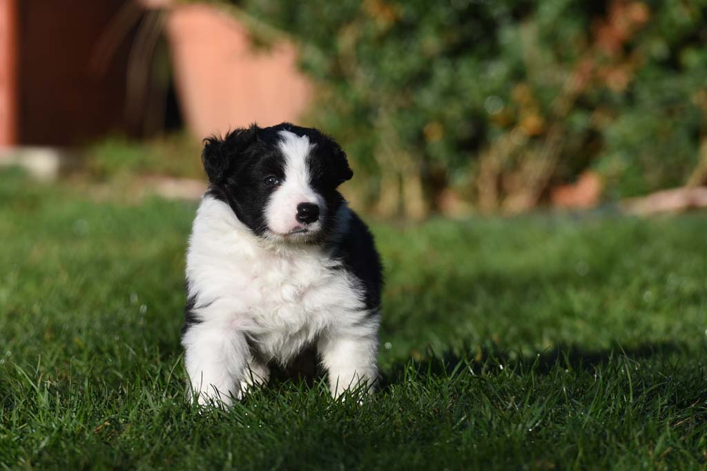 2015 12 05 Just the one and only von den Traumpfoten DSC 3484