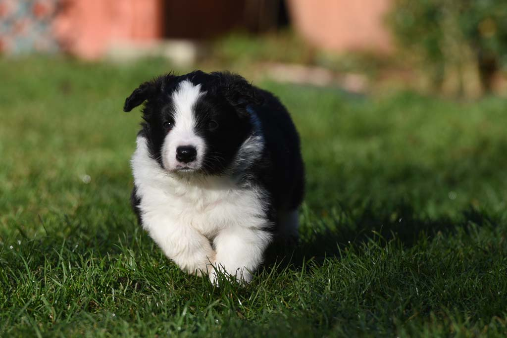 2015 12 05 Just the one and only von den Traumpfoten DSC 3486