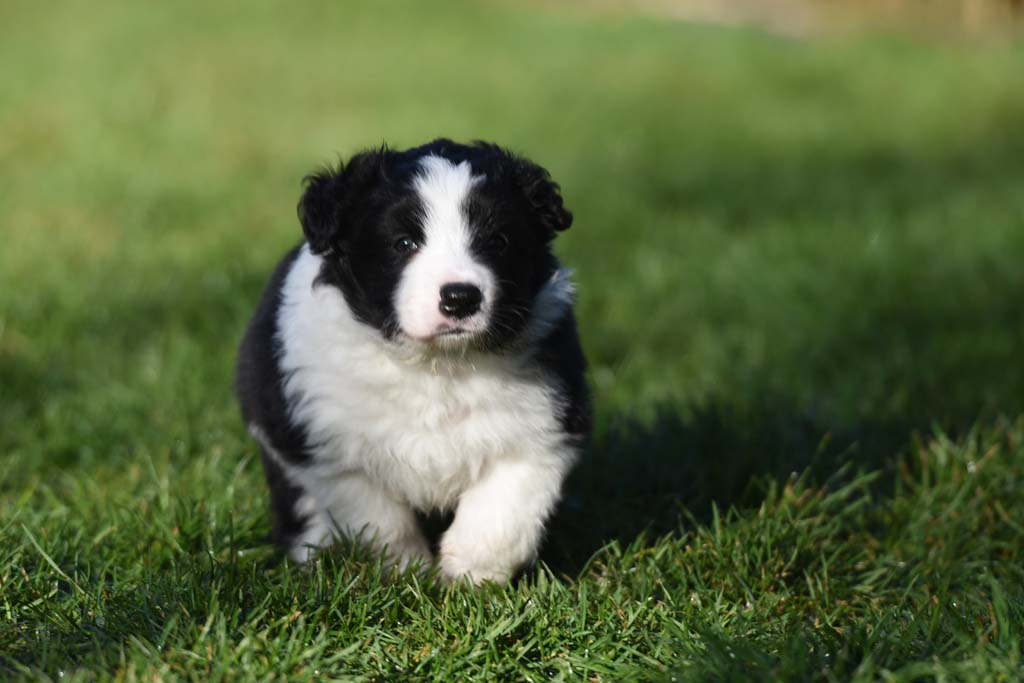 2015 12 05 Just the one and only von den Traumpfoten DSC 3490