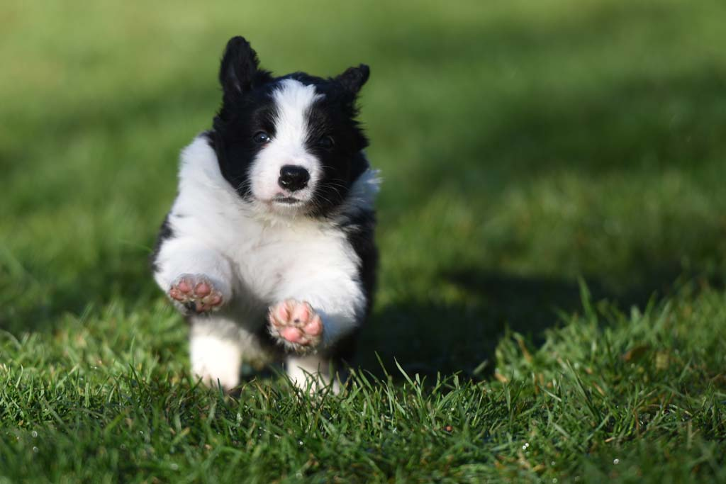 2015 12 05 Just the one and only von den Traumpfoten DSC 3492