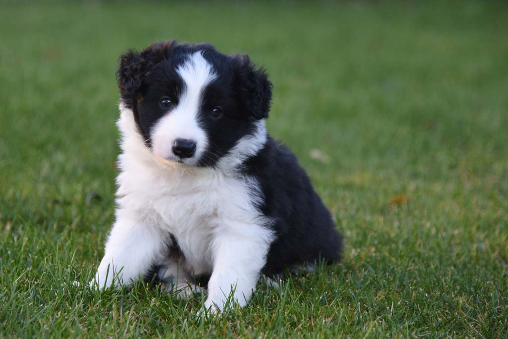 2015 12 06 Just the one and only von den Traumpfoten DSC 3564