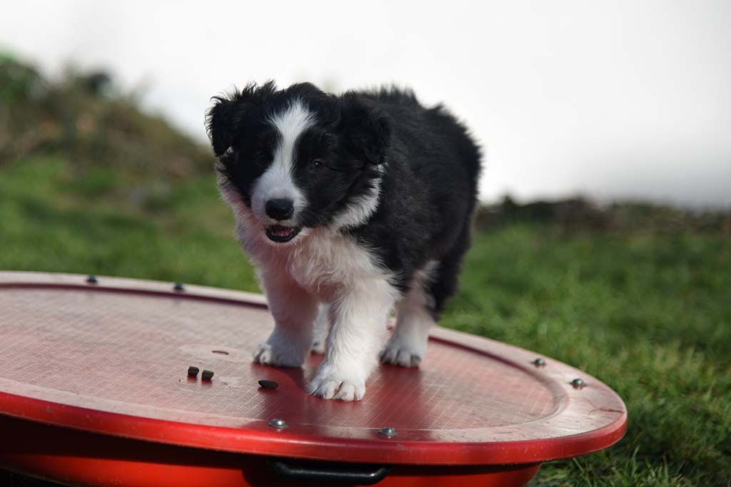 2015 12 12 Just the one and only von den Traumpfoten DSC 3569