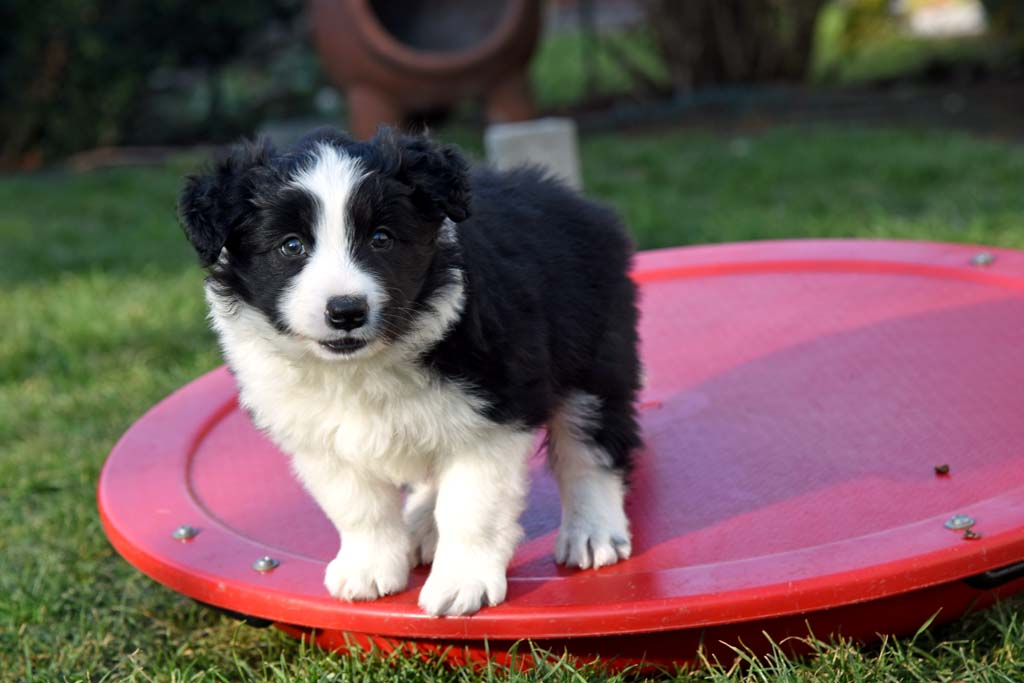 2015 12 12 Just the one and only von den Traumpfoten DSC 3580