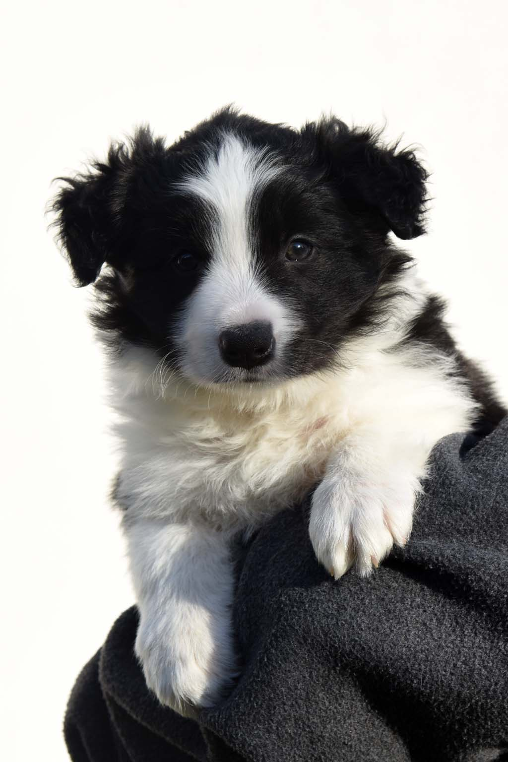2015 12 12 Just the one and only von den Traumpfoten DSC 3633