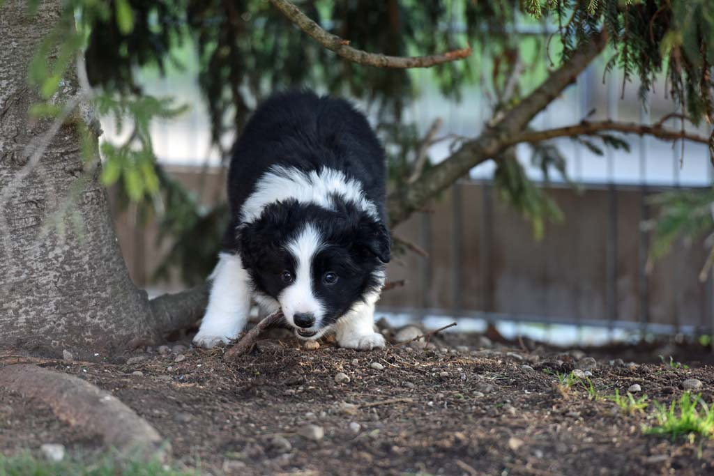 2015 12 13 Just the one and only von den Traumpfoten DSC 3649