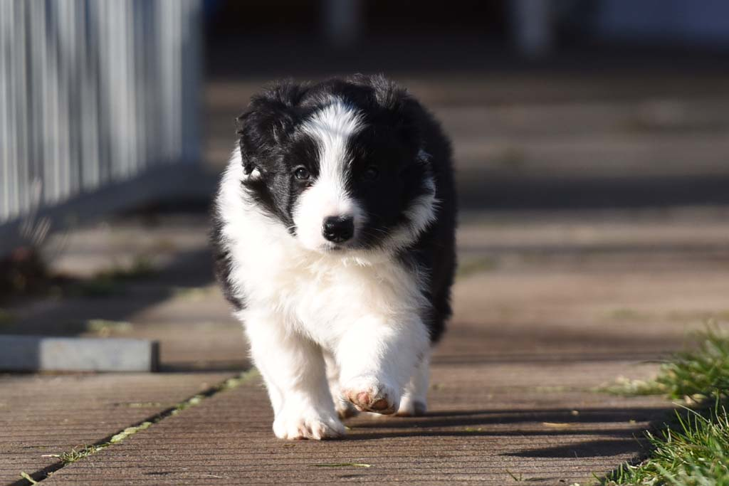 2015 12 13 Just the one and only von den Traumpfoten DSC 3663