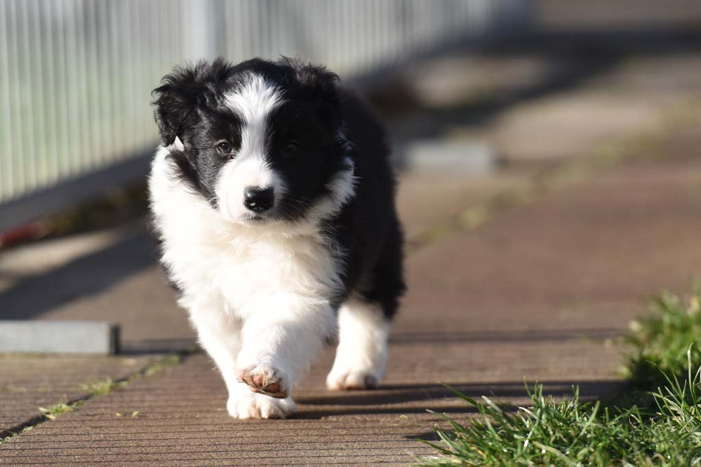 2015 12 13 Just the one and only von den Traumpfoten DSC 3674