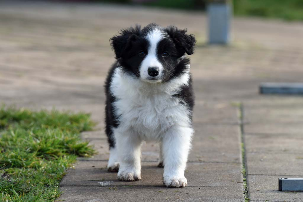 2015 12 19 Just the one and only von den Traumpfoten DSC 3690