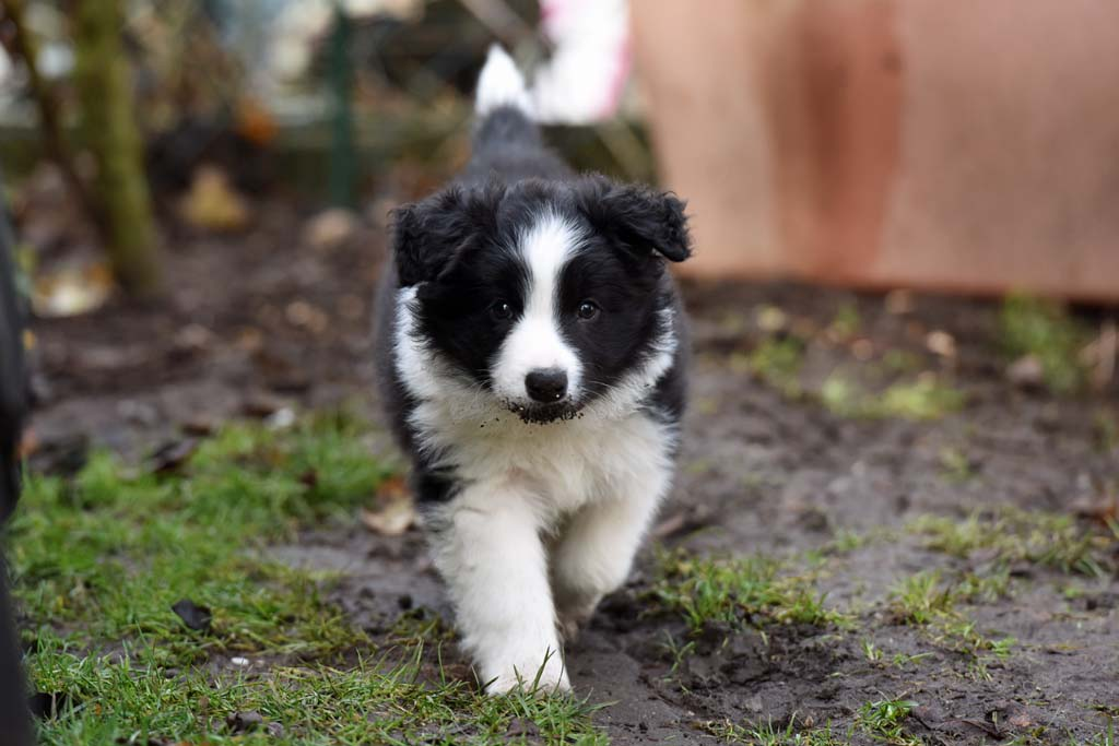 2015 12 19 Just the one and only von den Traumpfoten DSC 3694