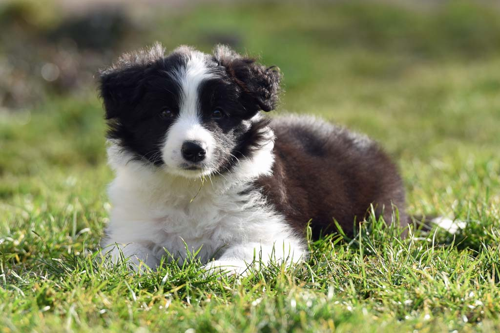 2015 12 19 Just the one and only von den Traumpfoten DSC 3716