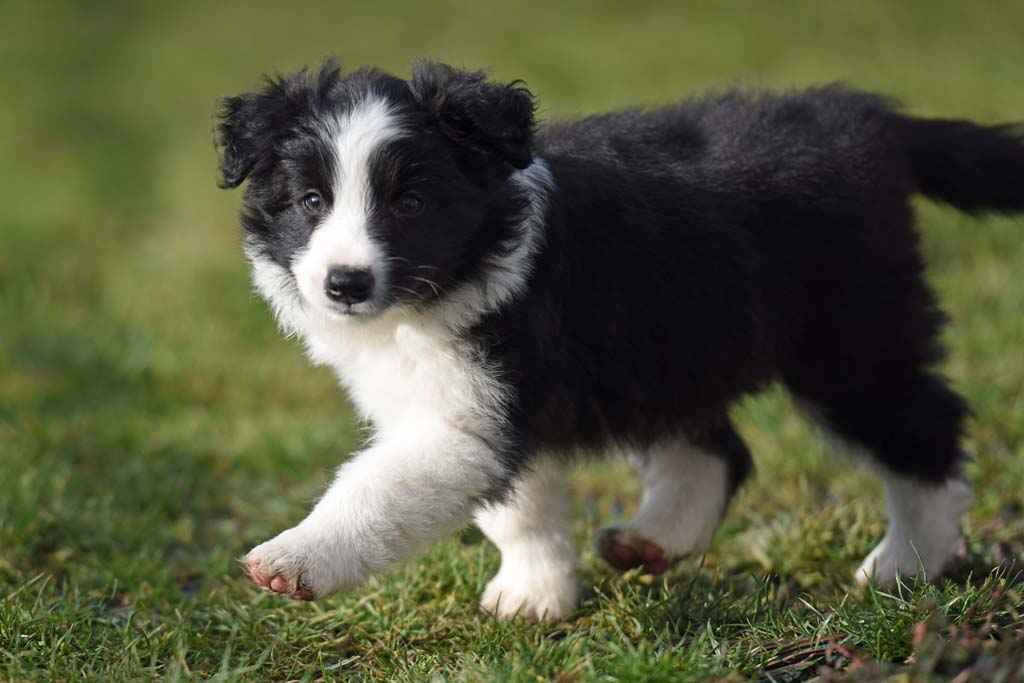 2015 12 19 Just the one and only von den Traumpfoten DSC 3717