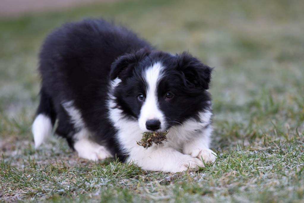 2015 12 27 Just the one and only von den Traumpfoten DSC 3753