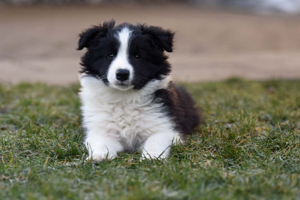 2015 12 27 Just the one and only von den Traumpfoten DSC 3754