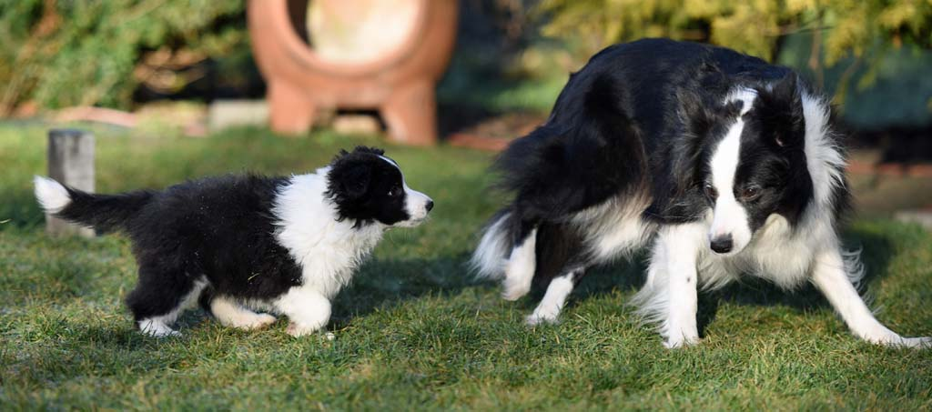 2015 12 27 Just the one and only von den Traumpfoten DSC 3760