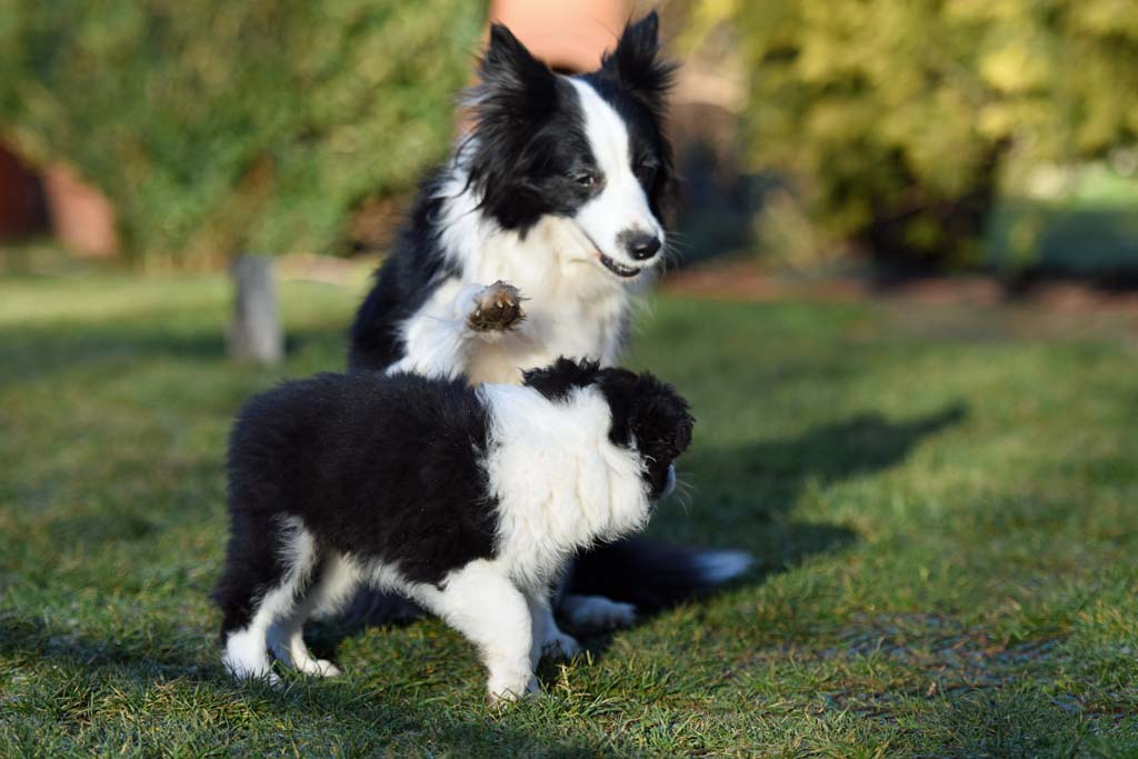 2015 12 27 Just the one and only von den Traumpfoten DSC 3763
