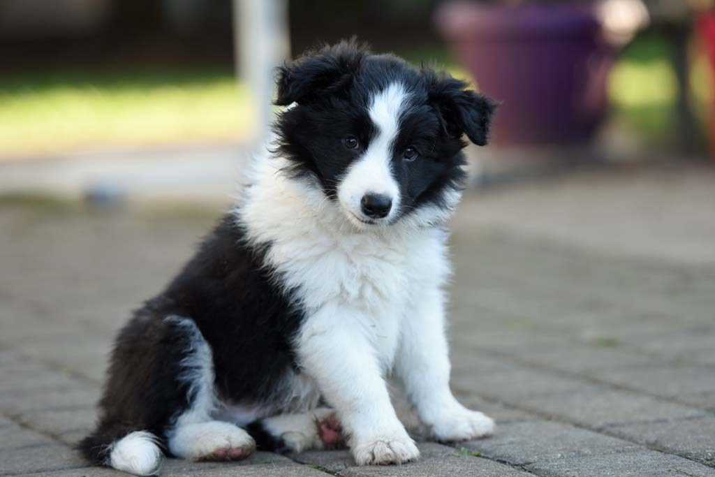 2015 12 27 Just the one and only von den Traumpfoten DSC 3777