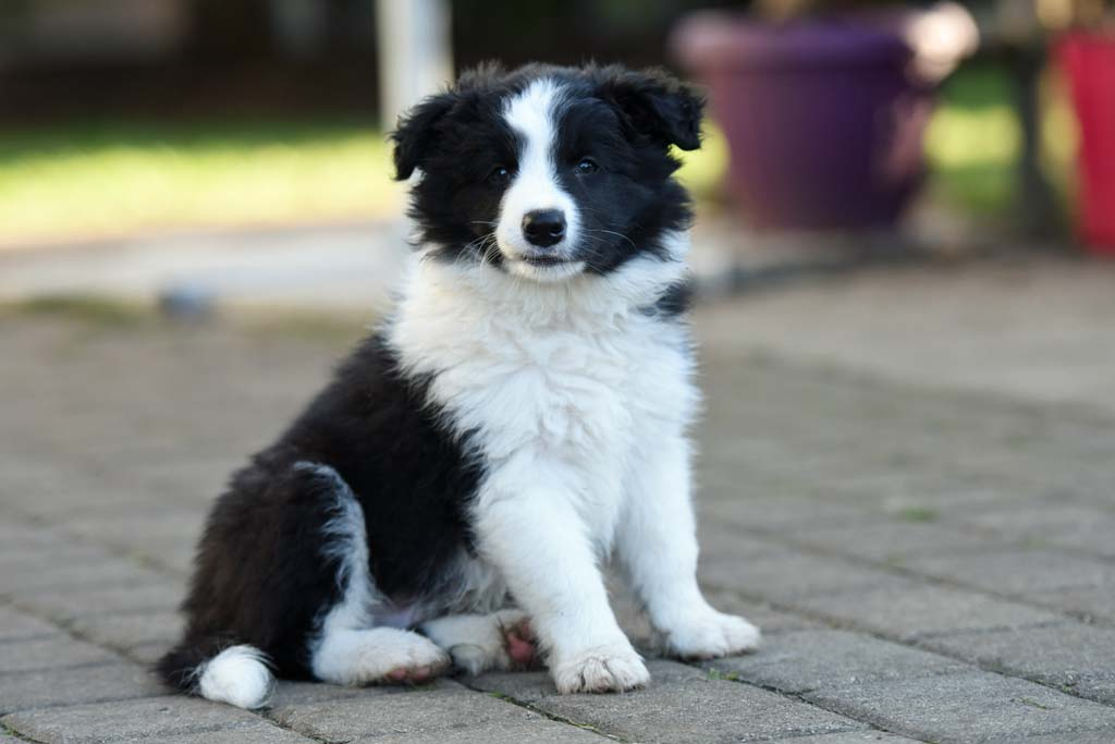 2015 12 27 Just the one and only von den Traumpfoten DSC 3782