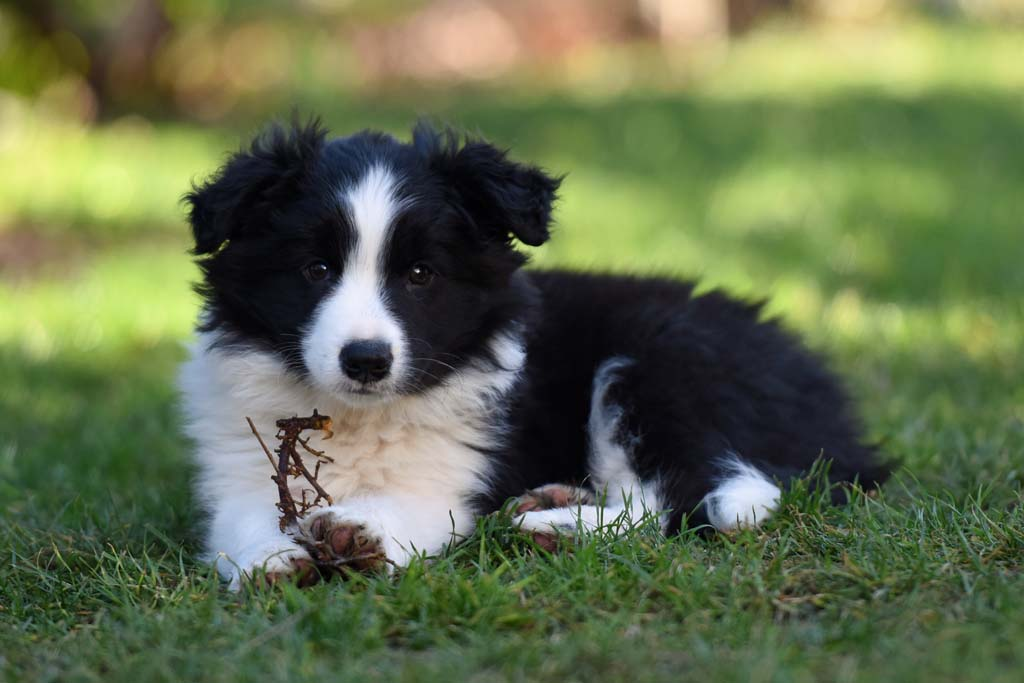 2015 12 27 Just the one and only von den Traumpfoten DSC 3791