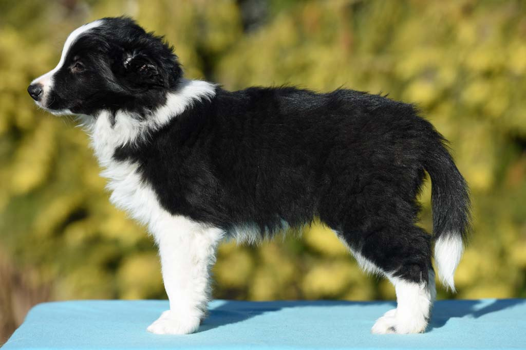 2015 12 28 Just the one and only von den Traumpfoten DSC 3817