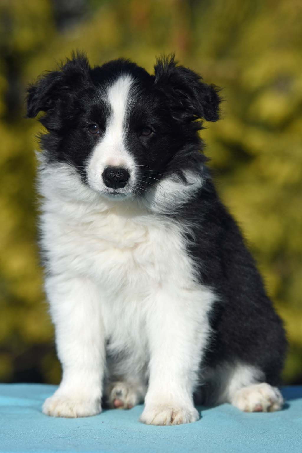 2015 12 28 Just the one and only von den Traumpfoten DSC 3823